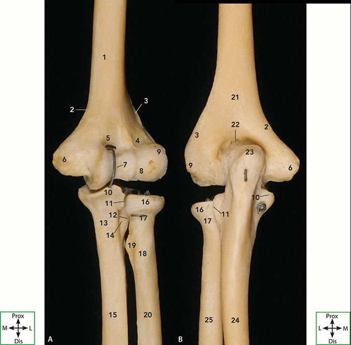 Logans Illustrated Human Anatomy